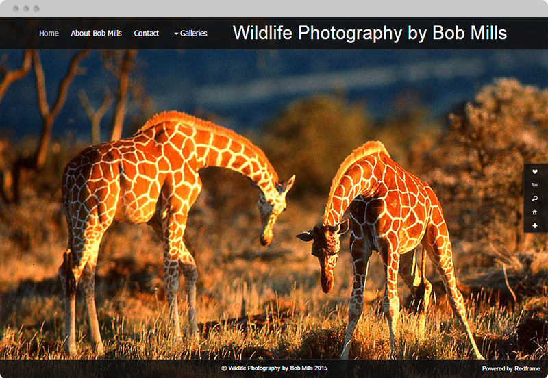 Redframe Photography Websites Client Example - Wildlife Photographer Bob Mills